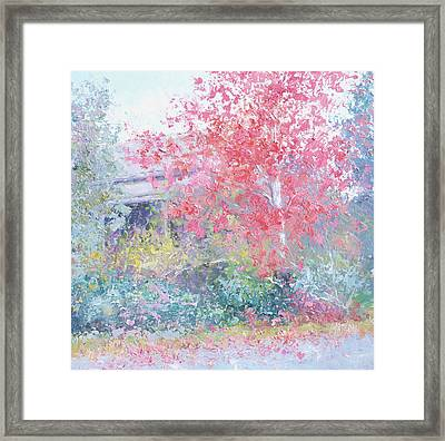 The Red Japanese Maple Tree Framed Print by Jan Matson