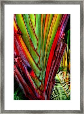 The Red Jungle Framed Print by Joseph J Stevens