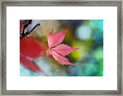 The Red Leaf  Framed Print