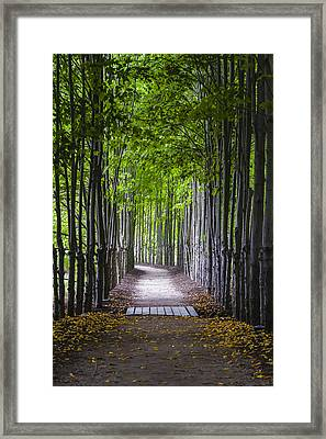 The Red Maple Allee Framed Print