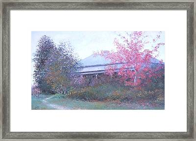 The Red Maple Tree Framed Print by Jan Matson