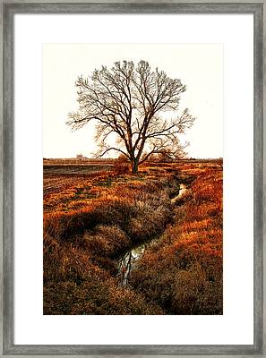 The Red Morning Tree Framed Print