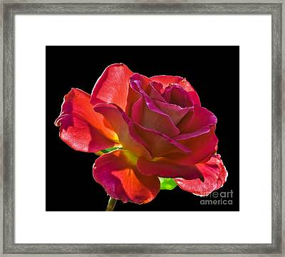 The Red One Framed Print