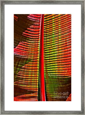 The Red Palm Framed Print by Joseph J Stevens