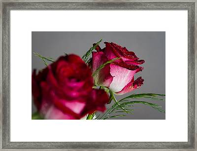 The Red Rose Framed Print by Andreas Levi