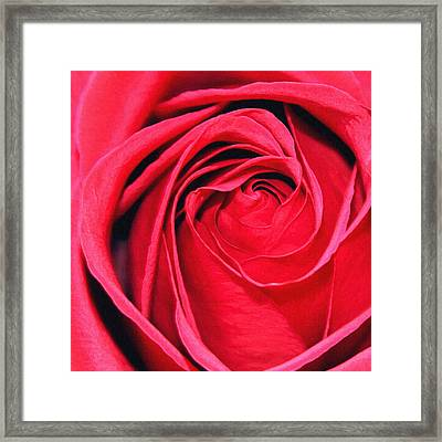 Framed Print featuring the painting The Red Rose Blooming by Karon Melillo DeVega