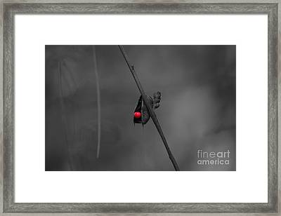The Red Seed Framed Print