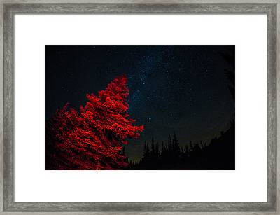 The Red Tree On A Starry Night Framed Print by Brian Xavier