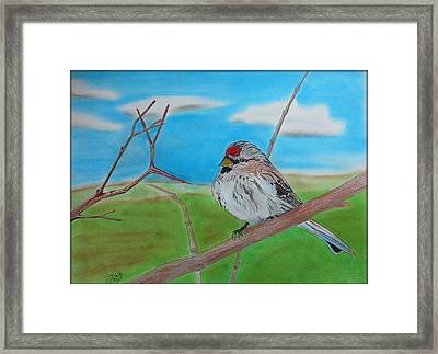The Redpoll Framed Print