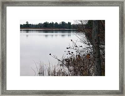 The Remnants Of Fall Framed Print by Rhonda Humphreys