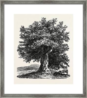 The Renewed Tree Framed Print by English School