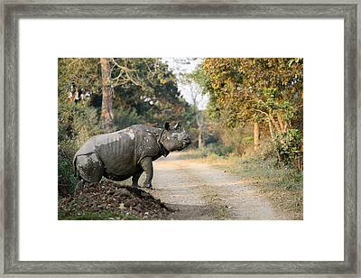 The Rhino At Kaziranga Framed Print by Fotosas Photography