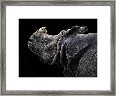 The Rhino Framed Print by Joachim G Pinkawa