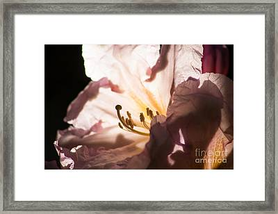 The Rhododendron Forest B Framed Print by Jennifer Apffel