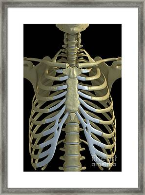 The Rib Cage Framed Print