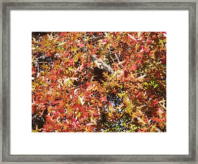 The Rich Reds And Yellows Of Fall Framed Print by James Rishel