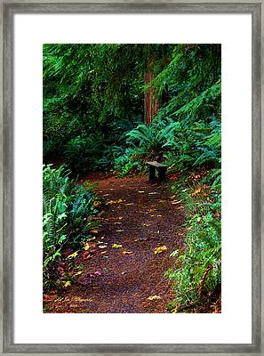 The Right Path Framed Print by Jeanette C Landstrom