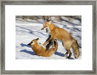 The Rivals Framed Print