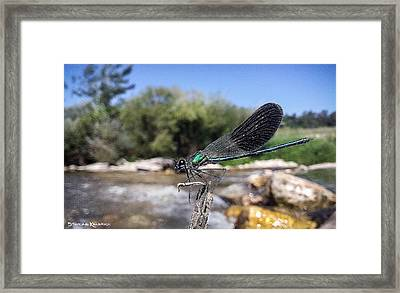 Framed Print featuring the photograph The River Dragonfly by Stwayne Keubrick