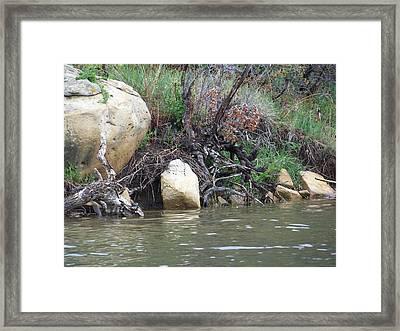 The River's Edge Framed Print