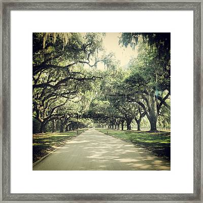 The Road From Boone Hall Framed Print