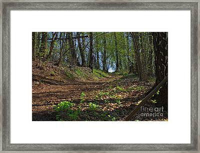 The Road In Spring Forest Framed Print by