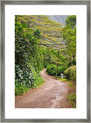 The Road Less Traveled Framed Print by Denise Bird