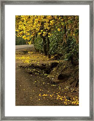 The Road Not Taken Framed Print by Ramon Fernandez