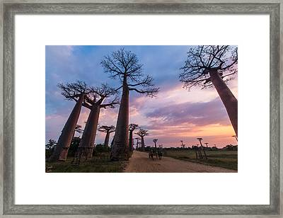 The Road To Morondava Framed Print