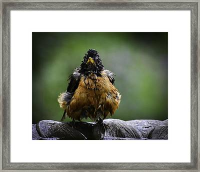 The Robin At 6-58 A.m. Framed Print
