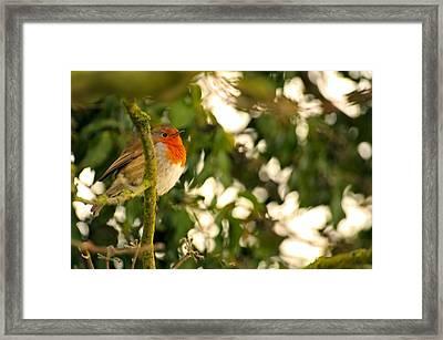 The Robin Framed Print by Dave Woodbridge