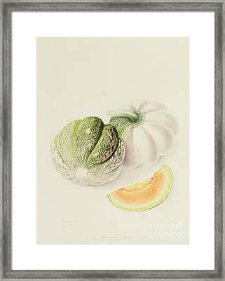 The Romana Melon Framed Print by William Hooker