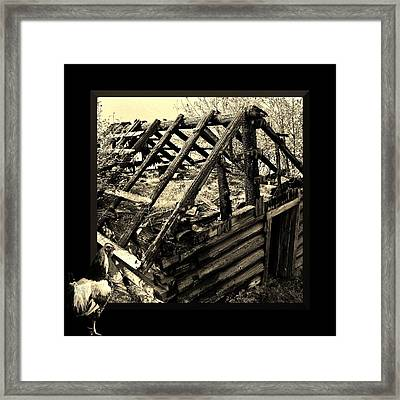 The Rooster Crowed At Dawn Framed Print