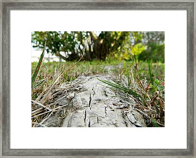 The Root Of Happiness Framed Print by Andrea Anderegg