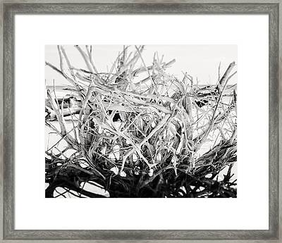 The Roots In Black And White Framed Print by Lisa Russo