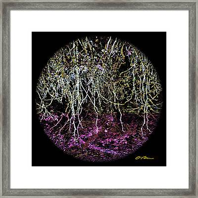 The Roots Of It All Framed Print by Claudia O'Brien