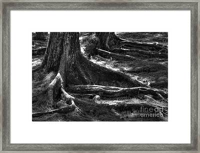 The Roots Framed Print by Sophie Vigneault