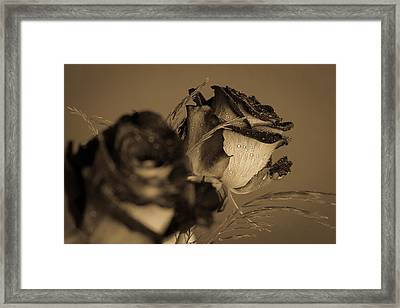 The Rose Framed Print by Andreas Levi