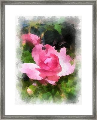 The Rose Framed Print by Kerri Farley