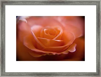 The Rose Framed Print by Kim Lagerhem