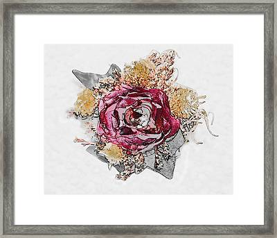 The Rose Framed Print by Susan Leggett