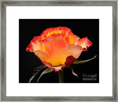Framed Print featuring the photograph The Rose by Vivian Christopher