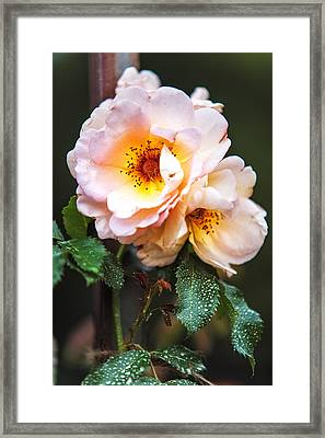 The Rose With Your Name. Park Of De Haar Castle Framed Print by Jenny Rainbow