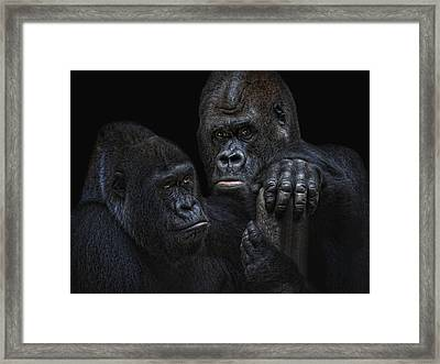 The Royals Framed Print by Joachim G Pinkawa