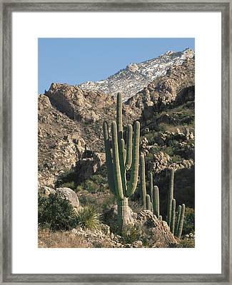The Rugged Catalina Mountains Framed Print by Elvira Butler