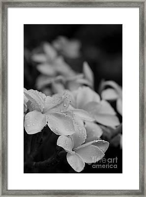 The Sacred Garden Framed Print by Sharon Mau