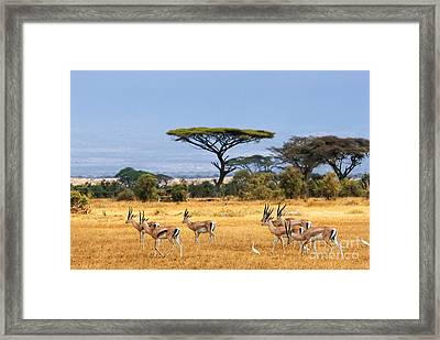 The Safari And Animals Framed Print by Boon Mee