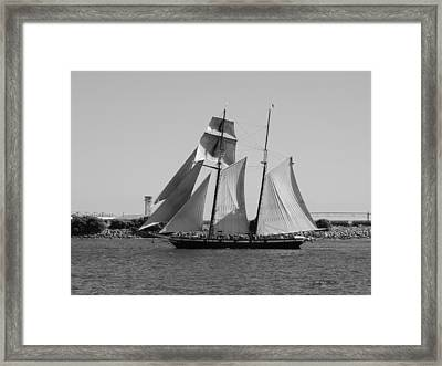 The Sails Framed Print by Judy  Waller