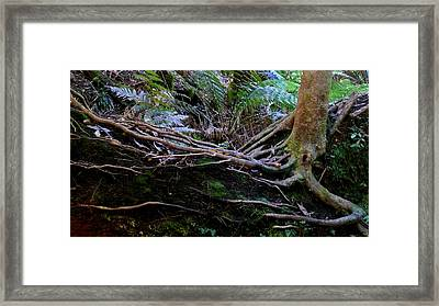 Framed Print featuring the photograph The Salamander Tree by Evelyn Tambour