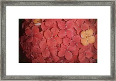 The Same- But Different Framed Print